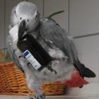 Papagei_Gesundheit