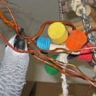Papagei mit Spielzeug