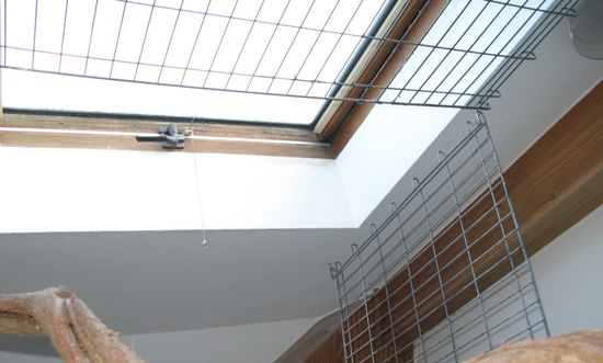 Dachfenster mit Fenstersicherung im Papageienzimmer - geöffnet