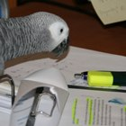 Papageien-News