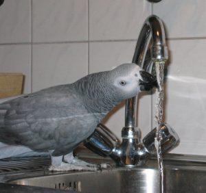 Die richtige Luftfeuchtigkeit für Papageien - Braucht man einen Luftbefeuchter?