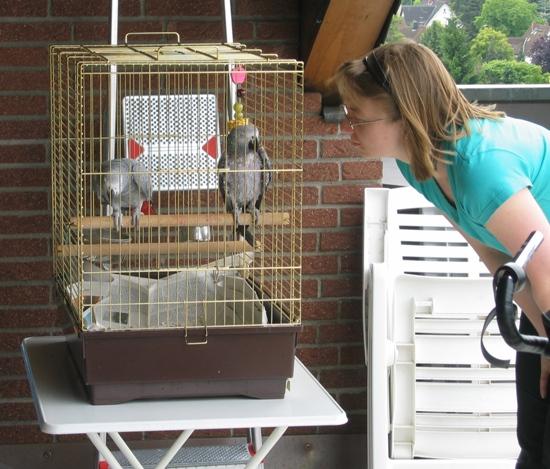 Papageienkäfig als Transportkäfig
