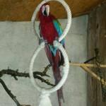 Käfigeinrichtung und Voliereneinrichtung als Beschäftigungsmöglichkeit für Papageien