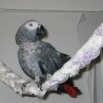 Geflochtene Bettlaken als Alternative zu Sitzästen für Papageien