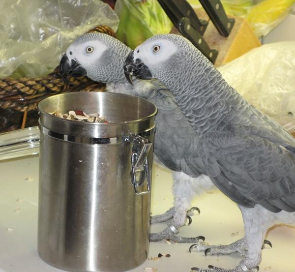 Urlaubsbetreuung für Papageien zu Hause